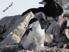 Antartide_08