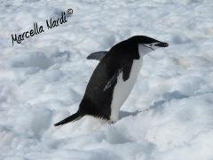 Antartide_09